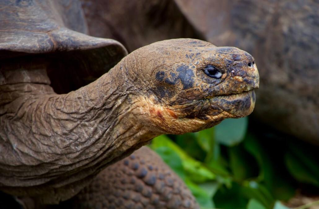 Galapagos Der Bewerbermarkt in Zeiten der Digitalisierung